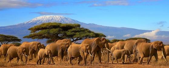 tours-and-safari-tanzania