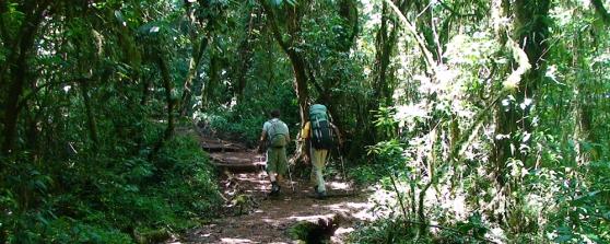kilimanjaro-my-hiking-01