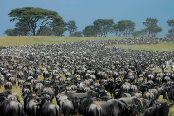 Migration-West-Serengeti_0000_Layer-6